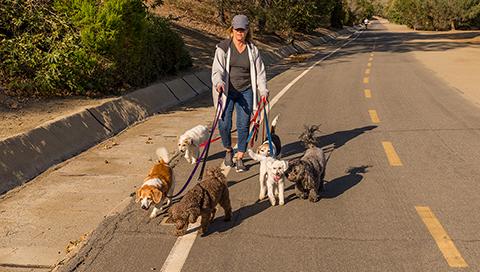 Micro-entrepreneur, dog walker